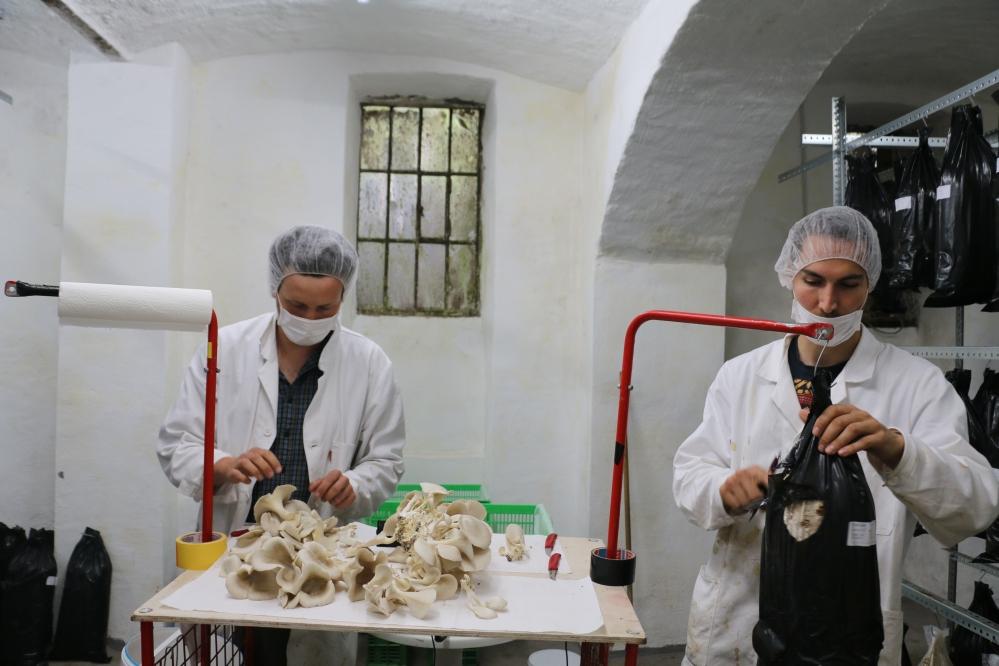 Manuel Bornbaum und Florian Hofer ernten